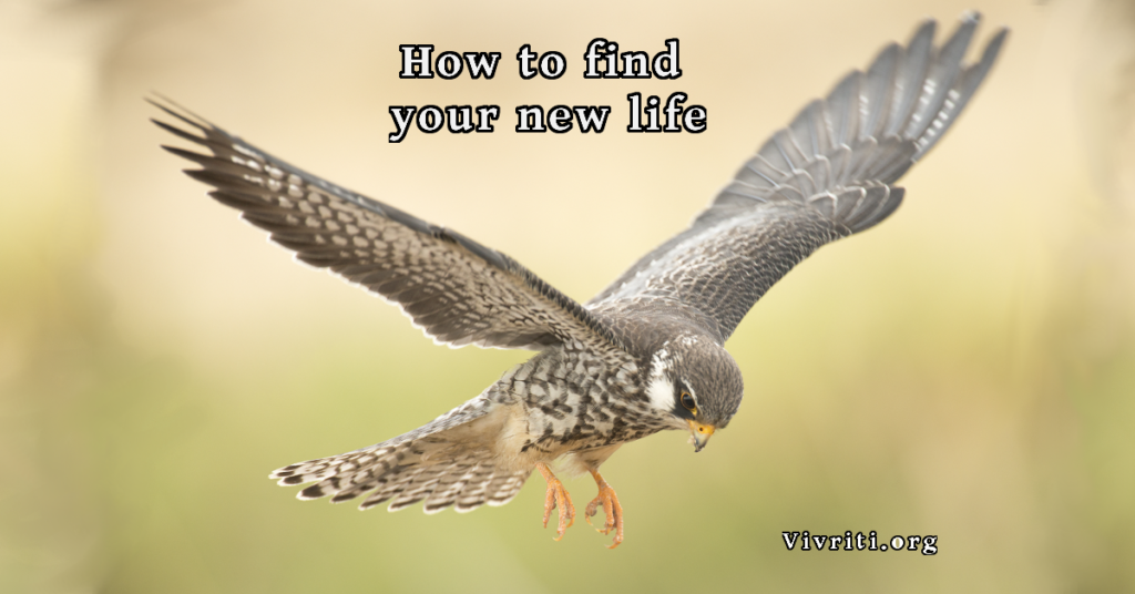 Find New Life